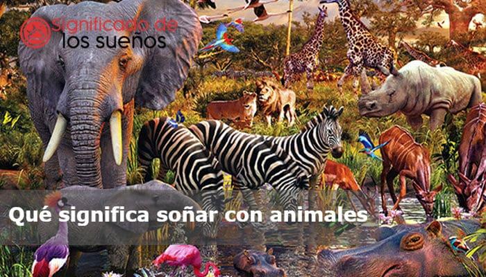 Que Significa Sonar Con Animales