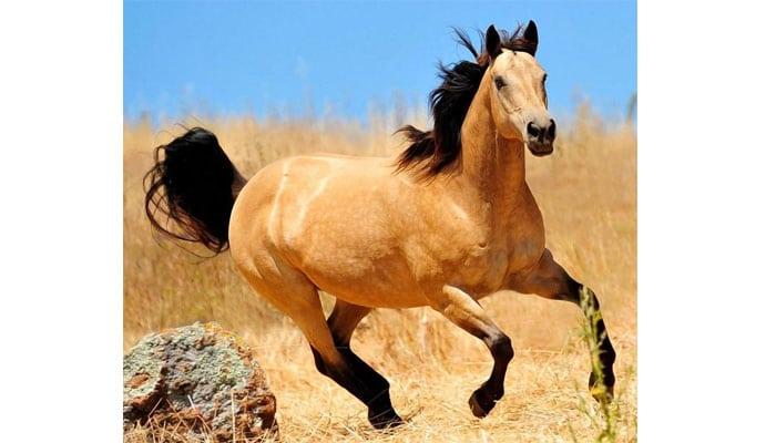 soñar con caballo corriendo