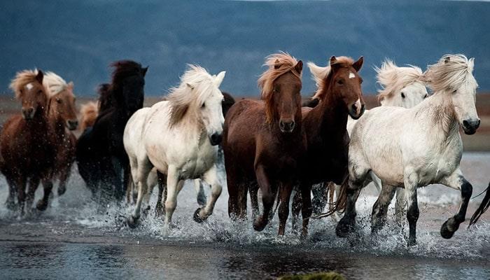 soñar con muchos caballos