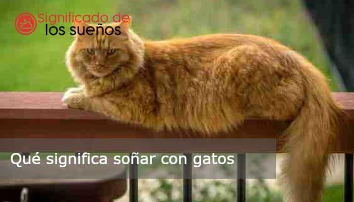 soñar con gatos