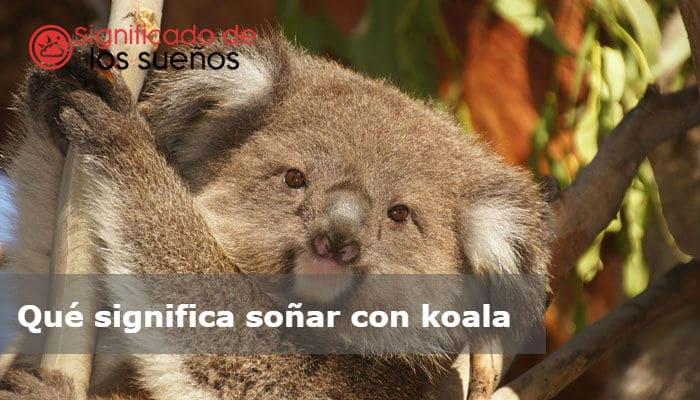 soñar con koala
