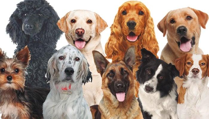 soñar con muchos perros
