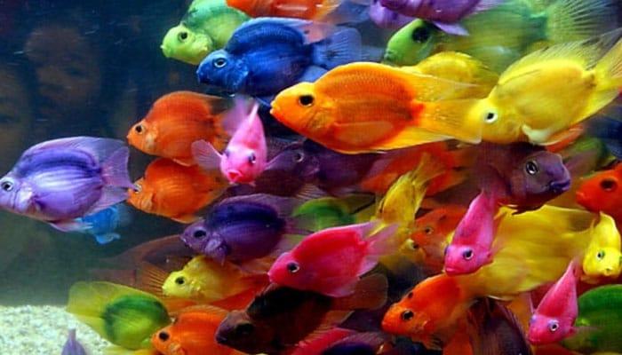 soñar con peces de colores