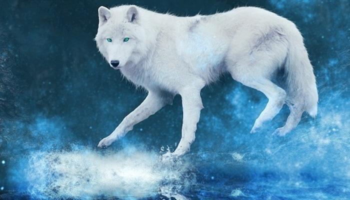soñar con lobo blaco