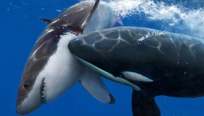 soñar con orcas y tiburones