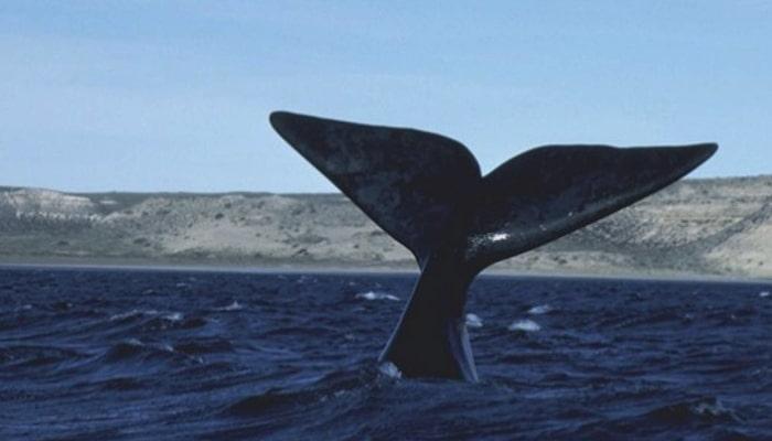 soñar con aletas de orca