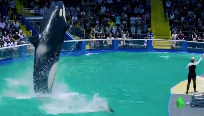 soñar con orcas en cautiverio