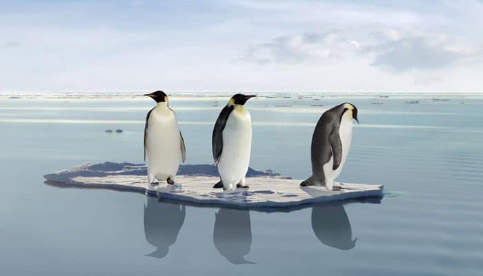 Soñar con varios pingüinos