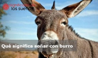 soñar con burro